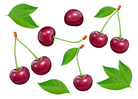 Set of Cherries with green leaf. Fresh, juicy, ripe fruit. Red realistic cherry berry. Vegetarian healthy food. Delicious dessert. Organic eating. Isolated white background. EPS10 vector illustration.