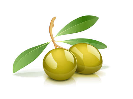 Two green olive with leaf. Oil natural vegetarian product. Healthy food ingredient. Italian fruit. Isolated white background. EPS10 vector illustration.