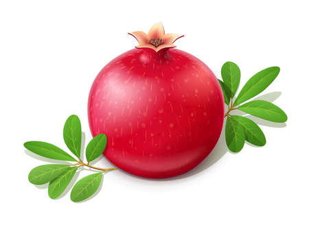 Ripe juicy pomegranate. Fruit with green leaves. Vegetarian food. Natural organic fresh plant. Isolated white background. EPS10 vector illustration.