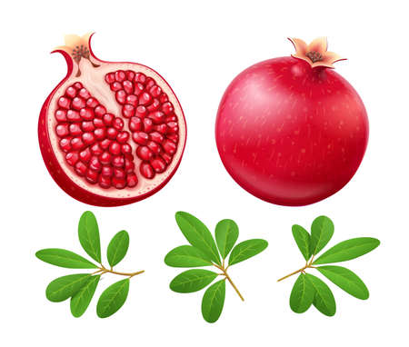 Set of Ripe juicy pomegranate. Cuted Fruit with green leaves. Vegetarian food. Two Natural organic fresh plant. Isolated white background. EPS10 vector illustration.