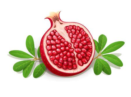 Grenade juteuse mûre. Fruits coupés aux feuilles vertes. La nourriture végétarienne. Plante fraîche biologique naturelle. Fond blanc isolé. Illustration vectorielle EPS10.