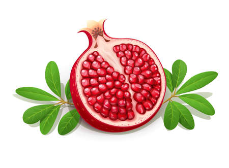 Ripe juicy pomegranate. Cuted Fruit with green leaves. Vegetarian food. Natural organic fresh plant. Isolated white background. EPS10 vector illustration.