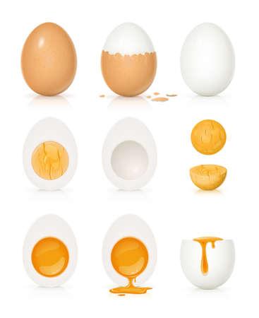 Set di uova con tuorlo e guscio. Prodotto per cucinare la colazione. Uovo sodo. Cibo organico. Vista frontale cibo naturale realistico. Isolato su sfondo bianco.