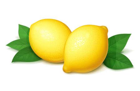 Limone maturo e succoso con foglia verde. Frutta tropicale realistica. Agrumi naturali. Prodotto per limonata fresca. Cibo organico. Sfondo bianco isolato. Eps10 illustrazione vettoriale.