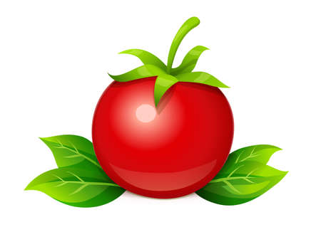 Tomato. Ripe vegetable with leaf, isolated white background. Eps10 vector illustration.