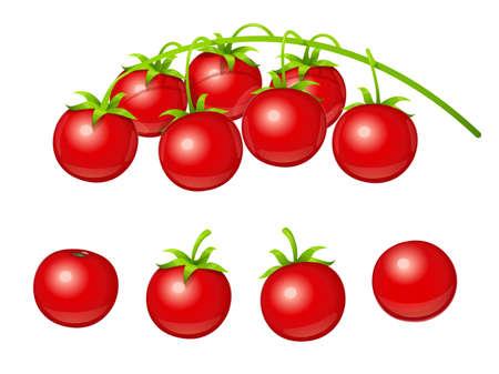 Tomate cereza. Conjunto de vegetales frescos en la rama. Producto de fruta vegetariana para cocinar alimentos. Fondo blanco aislado. Ilustración de vector Eps10.