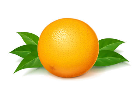 Ripe, juicy orange with green leaf. Realistic tropical fruit. Natural citrus. Product for fresh juice. Organic food. Isolated white background. Eps10 vector illustration.