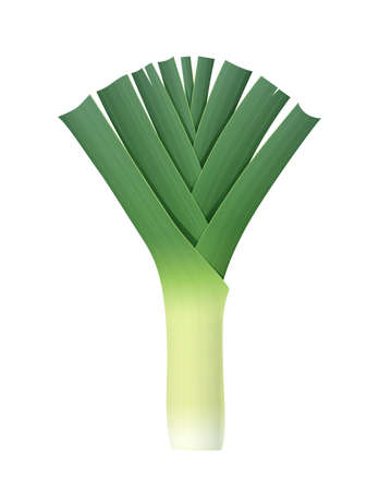 Oignon poireau. Légume vert mûr. Nourriture naturelle. Produit bio pour salade. Repas sain. Fond blanc isolé. Illustration vectorielle Eps10.