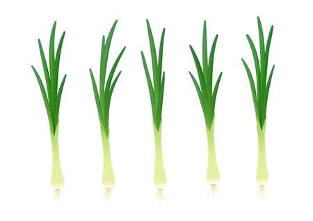 Zwiebel. Reifes grünes Gemüse. Natürliches Essen. Bio-Produkt für Salat. Botanische Pflanze. Gesundes Essen. Isolierter weißer Hintergrund. Eps10-Vektor-Illustration. Vektorgrafik
