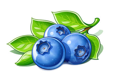 Bilberries. Ripe fresh berry. Useful fruit, Isolated on white background.