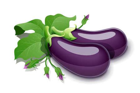 Eggplant. Vegetable food, Isolated on white background. Eps10 vector illustration.