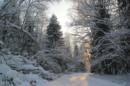 Beginning of winter sunset on a road passing through a dense snowy Russian forest