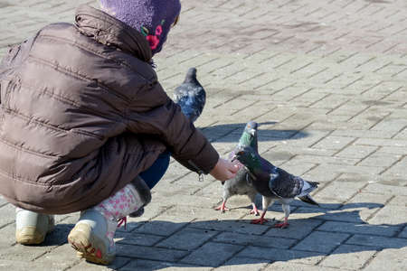 a child feeds pigeons outside on a sunny day