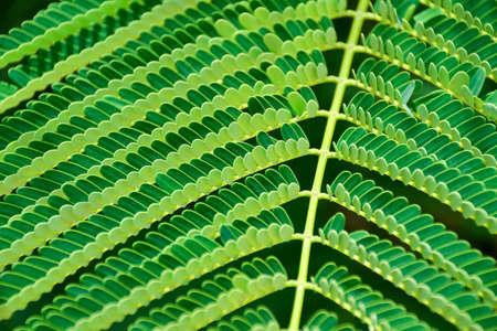 green fern leaf close up