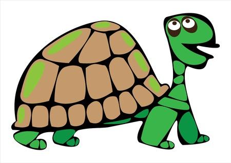 turtle isolated: tortuga vector de dibujos animados aislado en el fondo blanco Vectores