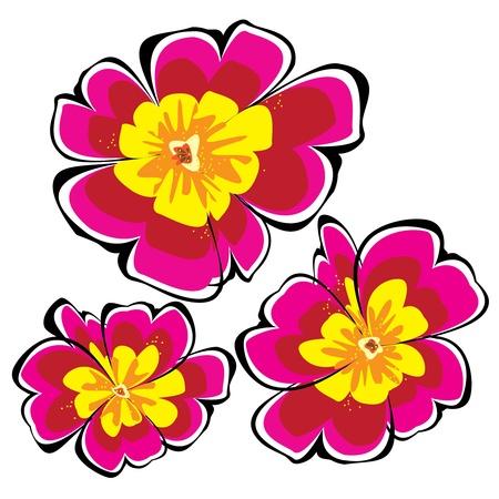 primrose: red  primroses isolated on white background