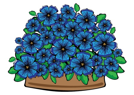 petunia: blue  petunia flowers in pot isolated on white background Illustration
