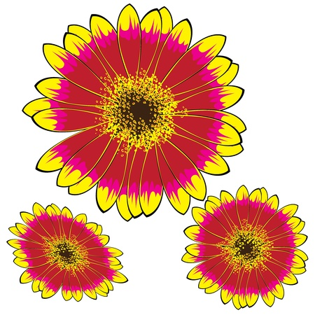 yellow-red gerbera isolated on white background Vector