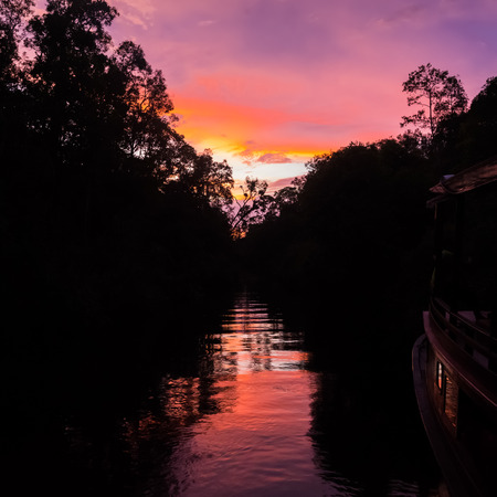 Colorful sunset over the water amongst the dense jungle (Bohorok, Indonesia)
