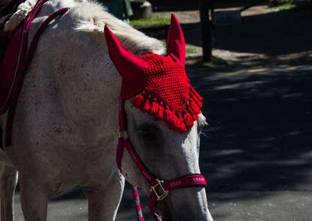 Horseback riding along the promenade in Arkhangelsk