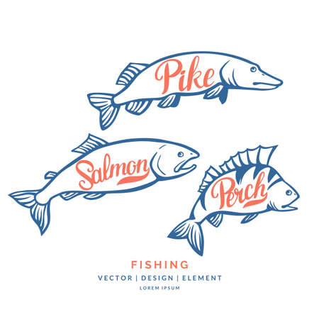 Modern hand drawn lettering word Perch, salmon and pike. Calligraphy brush and ink. Vector illustration Fish