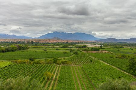 Panorama Huge vineyards in the mountains cloudy sky Stock Photo
