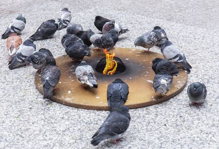 City pigeons try to keep warm at an artificial source of fire and heat. Stock photo
