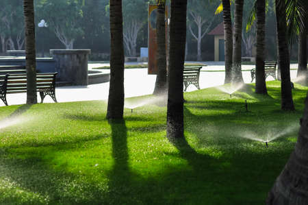 Watering the grass in the park on a summer day in the shade under the palm trees. Banque d'images