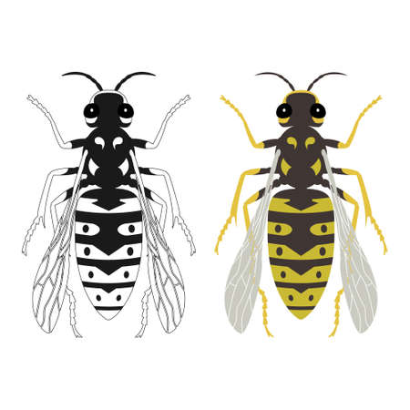 Vector illustration of a wasp in color and black and white. Insect
