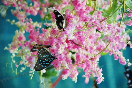 Beautiful butterfly on a flower. Stock Photo