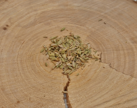 fennel seeds: Fennel seeds on a crosscut a tree Stock Photo