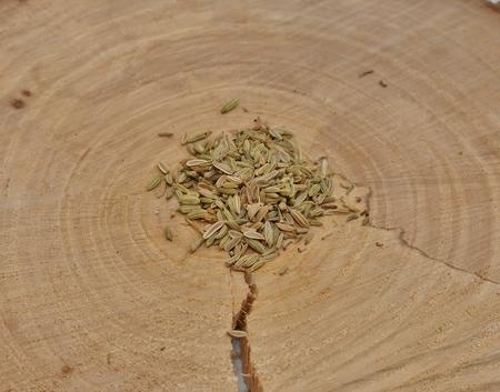 crosscut: Fennel seeds on a crosscut a tree Stock Photo