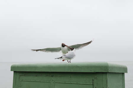 two seagulls flirt with each other