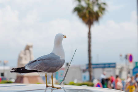 seagull on the roof of the car in the port