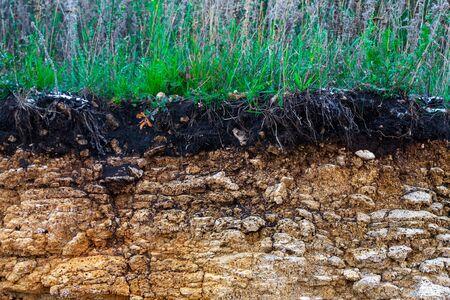 Erozja krawężnika w wyniku burz. Aby wskazać warstwy gleby i skały. Przekrój poprzeczny gleby pod ziemią z zieloną trawą, odcięta powierzchnia terenu ziemi