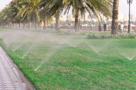 Beautiful green lawn park with trees is sprayed with automatic water spray sprinkler installation during hot period in summer blue sky. Irrigation turf.