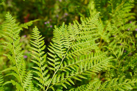 Go green. Green fern tree growing in summer. Fern with green leaves on natural background. Green is the color of spring and hope. Texture backdrop. Wild nature jungles forest.