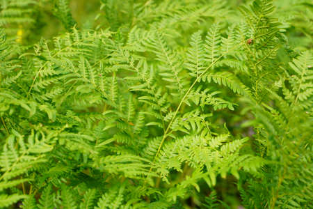 Exotic tropical ferns with shallow depth of field. Green fern leaves in blurred green natural background. Selective focus. Standard-Bild