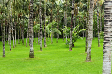 Meadow with green grass and palm trees photo
