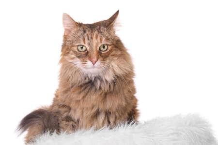 whiskar: cat isolated on white Stock Photo