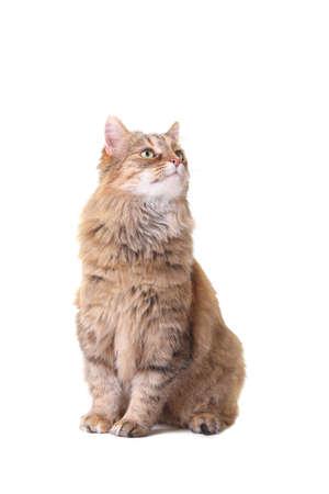 cat isolated on white Stock Photo