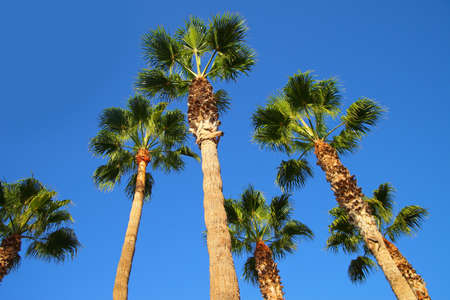 fade away: palm trees summer holiday photos Stock Photo