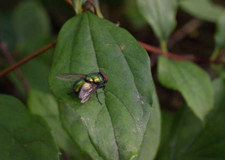 beine spreizen: Die Fliege sitzt auf einer Anlage