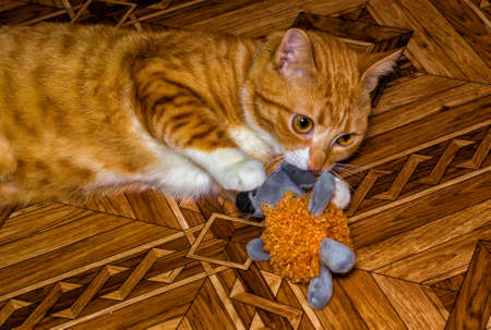 Home red cat plays with a toy