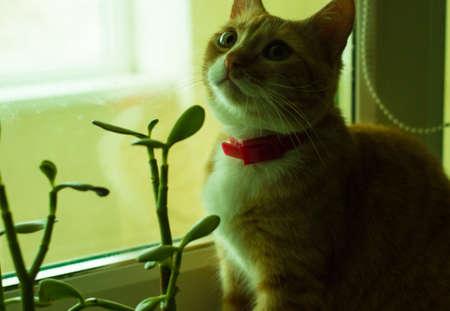 catnip: Cute domestic red cat near plant