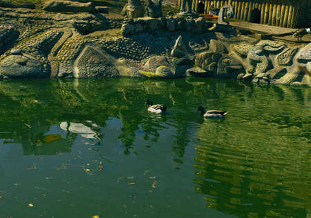 koi: City pond Spring Summer Daylight