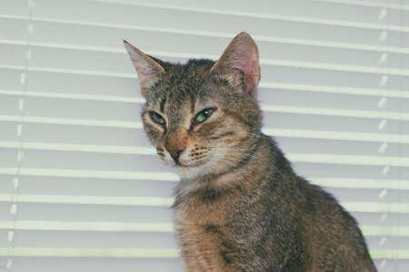 Funny cute cat at home, pet indoor
