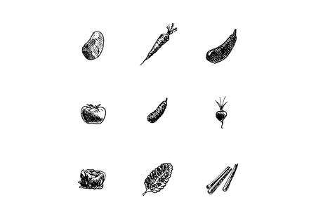 Hand drawn vegetables set on white background. Vector illustration.