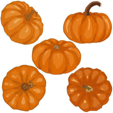 scary pumpkin: pumpkin isolated