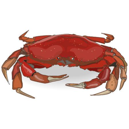 on white: crab isolated white background